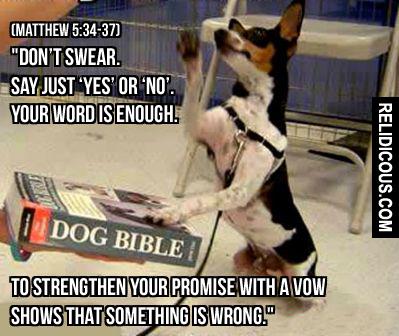 swearing_dog