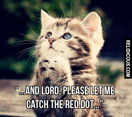 a_cats_prayer