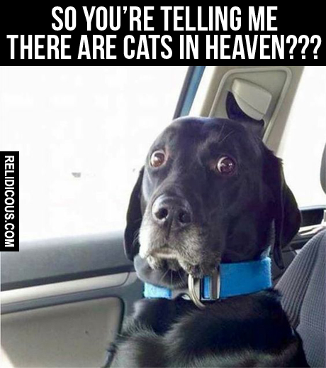 there_are_cats_in_heaven