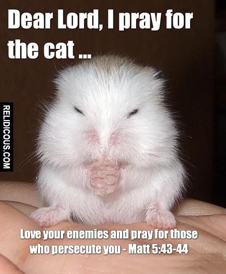 mouse-pray-for-the-cat