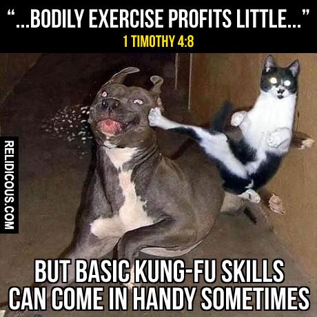 kung-fu_cat