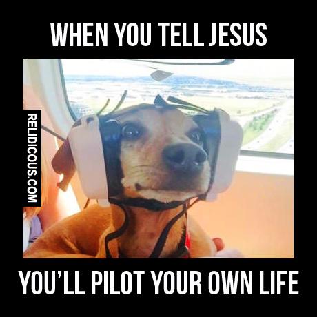 dog_pilot